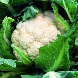 Cauliflower - Atalaya F1