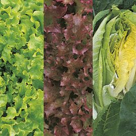 Lettuce - Continental Mixed