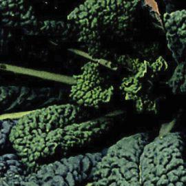 Kale - Black Tuscan