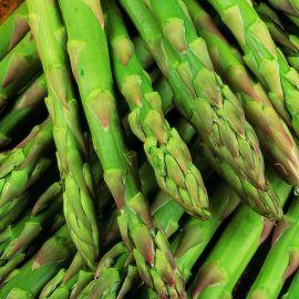 Asparagus - Gijnlim F1