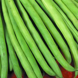 Bean - Dwarf French - Patio French Green Beans