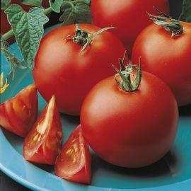 Tomato (Bush) - Totem F1
