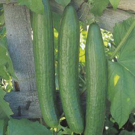 Cucumber - Telegraph