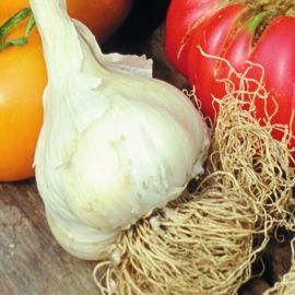 Onion - Garlic