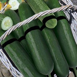 Cucumber - Min Delta Star F1