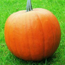 Pumpkin - Ghost Rider