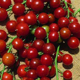 Tomato - Sweet Millions