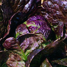 Lettuce - Red Little Gem