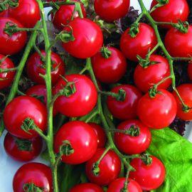 Tomato - Sweet Aperitif F1