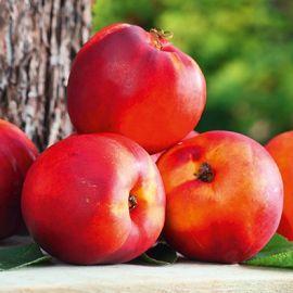 Fruit Me - Necta Mefruit tree