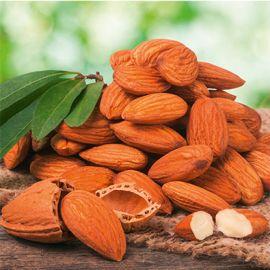 Nut Me - Almondfruit tree