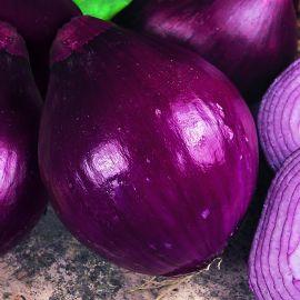 Onion - Red Baron