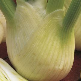 Florence Fennel - Rondo