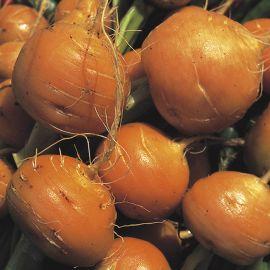 Carrot - Paris Market