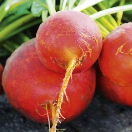 Beetroot - Golden