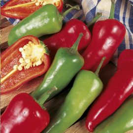 Pepper - Chilli - Jalapeno