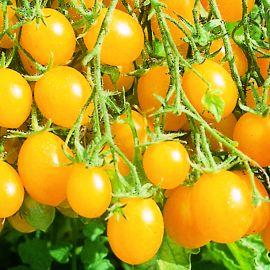 Tomato - Sunbelle