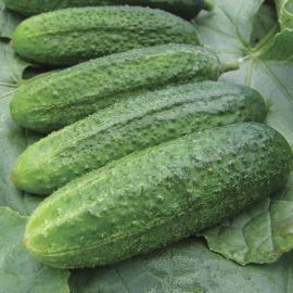 Cucumber - Gherkin - Gherkin