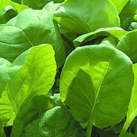 Cut & Grow Again - Lambs Lettuce
