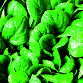 Cut & Grow Again - Spinach Amazon