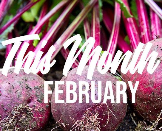 In the garden - February
